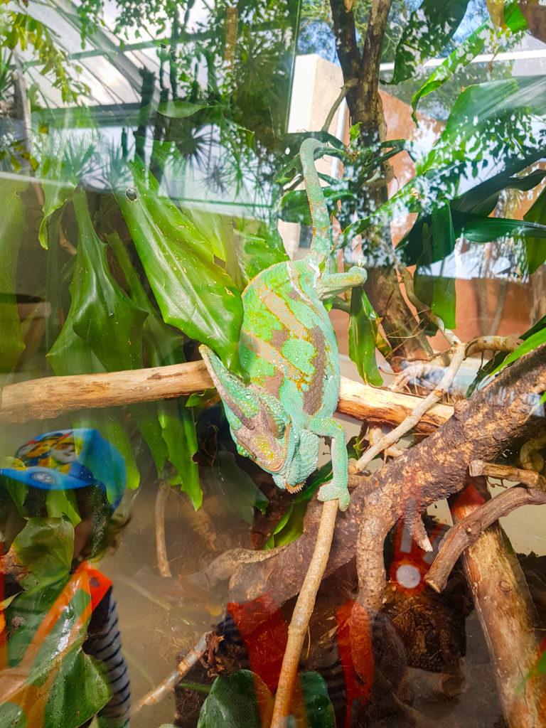 tropiquarium-grands-4